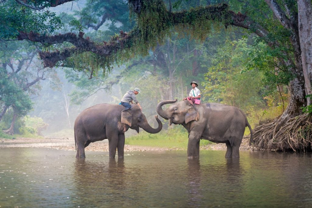 Go Elephant Trekking at Mahawangchang Elephant Camp